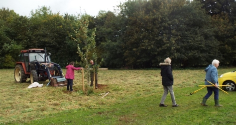 wi-tree-plant-2