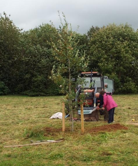 wi-tree-plant-3