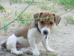 Twiglet aged 3 months