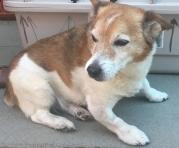 Twiglet Oakley aged 16